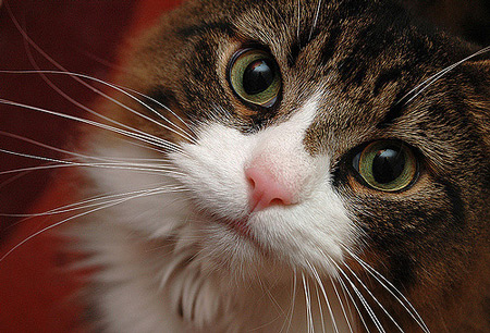 cute-cat-closeup